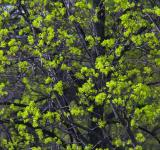 Free Photo - green spring leaves