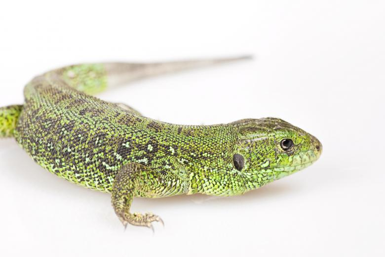 Free Stock Photo of Green Lizard Created by 2happy