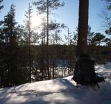 Free Photo - Winter Woods