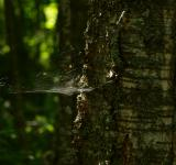 Free Photo - Spiderweb in tree