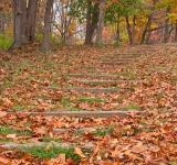 Free Photo - Seneca Fall Steps - HDR