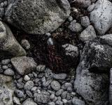Free Photo - Seaweed and Rocks Texture