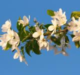 Free Photo - blossoming tree