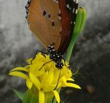 Free Photo - Beautiful butterfly