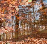 Free Photo - Avalon Fall Reflections