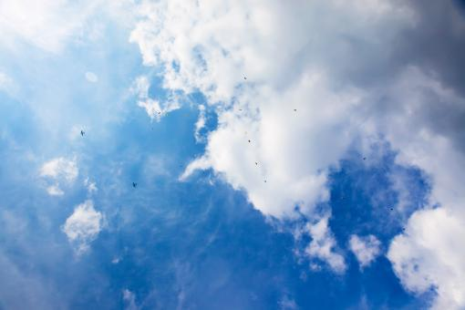 skydivers in blue sky - Free Stock Photo