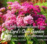 Free Photo - Transplanted Into God