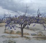 Free Photo - A tree in Cappadocia