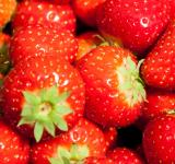 Free Photo - Strawberries background