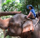 Free Photo - Elephant trekking