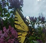 Free Photo - Magnificent Monarch