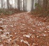 Free Photo - Misty Winter Trail - HDR