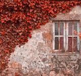 Free Photo - Red Ivy Wall - HDR