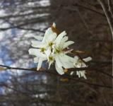 Free Photo - Signs Of Spring
