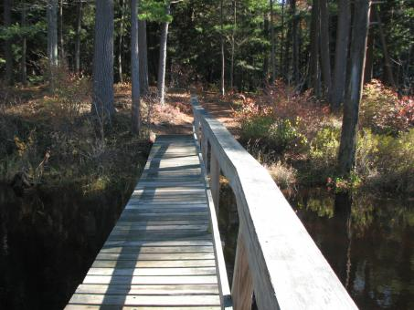 Boardwalk in the woods - Free Stock Photo