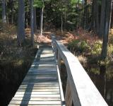 Free Photo - Boardwalk in the woods