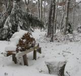 Free Photo - Wood pile in snow