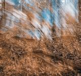 Free Photo - Avalon Phantom Forest