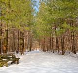 Free Photo - Winter Pine Trail - HDR