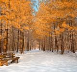 Free Photo - Gold Winter Pine Trail - HDR