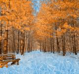 Free Photo - Burning Ice Trail