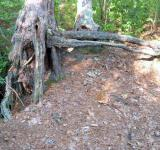 Free Photo - Deformed Tree Stumps