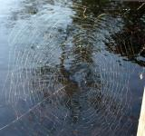 Free Photo - Spider Web