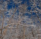 Free Photo - Susquehanna Winter Foliage - HDR
