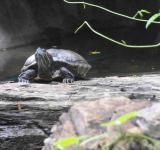 Free Photo - Turtle in Nature