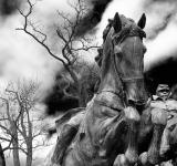 Free Photo - Grant Cavalry Statue - Black & White