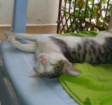 Free Photo - Cat sleeping