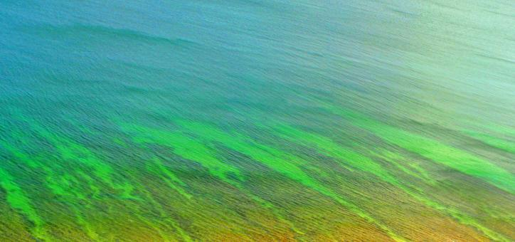 Beautiful natural pattern - Ocean ripple - Free Stock Photo