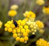 Free Photo - Beetle sits on yellow flower