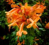 Free Photo - Beautiful blooming orange flower