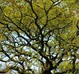 Free Photo - Convoluted Tree Branches