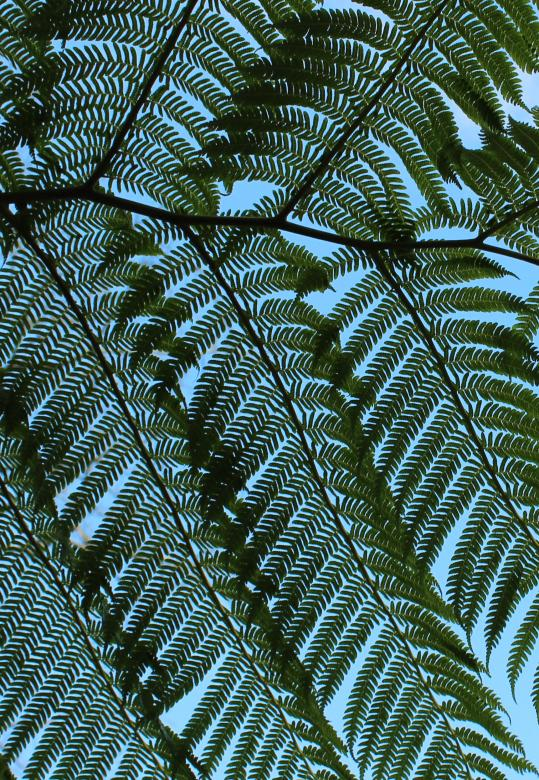 Giant Fern Leaves - Free Organic Backgrounds