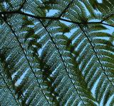 Free Photo - Giant Fern Leaves - detail