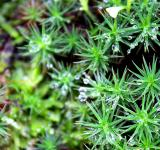 Free Photo - Macro of dew drops on moss