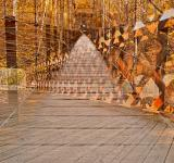 Free Photo - Bridging Perspectives