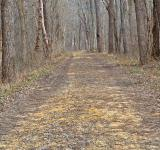 Free Photo - Sycamore Landing Trail - HDR