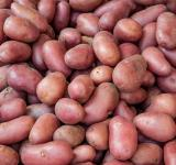Free Photo - Organic red potato pile sold on market