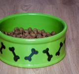 Free Photo - Bowl with dry food for dog or cat
