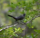 Free Photo - Black Bird On a Branch.