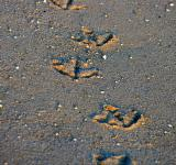 Free Photo - Seagull Footprints