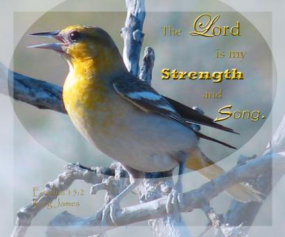 Strength and Song - Free Stock Photo