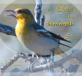 Free Photo - Strength and Song