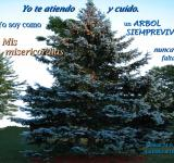 Free Photo - Sus Misericordias Nunca Faltan