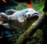Free Photo - big fish