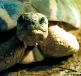 Free Photo - Cute Sea Turtle face