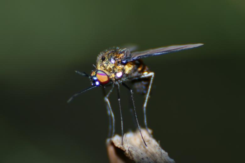 Free Stock Photo of Macro Fly Created by Wilson Paul